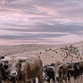 Cattle Drive Triptych 2 by Rick Mosher