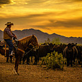 Cattle Drive 41 by Larry White