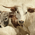 Cattle Steers by Athena Mckinzie