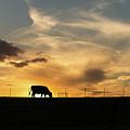Cattle Sunset Silhouette by Jennifer White