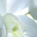 Cattleya Orchid #1 by George Robinson