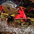 Caught In The Waterfall by Susie Peek