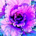 Cauliflower Abstract #8 by Ed Weidman