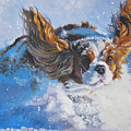 Cavalier King Charles Spaniel Blenheim In Snow by Lee Ann Shepard