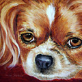 Cavalier King Charles Spaniel by Portraits By NC