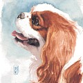 Cavalier Profile by Debra Jones