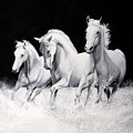 Cavalli Verticali by Danka Weitzen