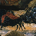 Cave Drawing/lascaux by Granger