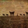 Pioneers by Lynn Sprowl