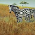 Cebras  In  Rhino  Park by Juan Enrique Marquez