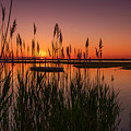 Cedar Beach Sunset In The Reeds by Alissa Beth Photography