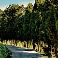 Cedar Curve by Edward Shmunes