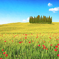 Cedar Grove And Poppies by Dominic Piperata