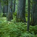 Cedar Grove by Idaho Scenic Images Linda Lantzy