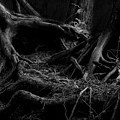 Cedar Roots Black And White by Tim Beebe