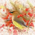 Cedar Waxwing Among The Berries by Ola Allen