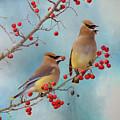 Cedar Waxwing Pair by Amy Jackson