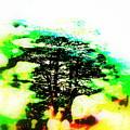 Cedars Of Lebanon  by Funkpix Photo Hunter