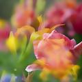 Celebration Of Color by Toni Hopper