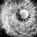 Celebration Of Nature In Black And White by Karen Wiles