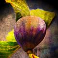 Celeste Fig by Anastasia Savage Ealy