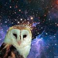 Celestial Nights by Robert Orinski