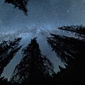 Celestial Starlight In The Forest Near  Lake Irene Colorado by OLena Art Brand