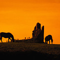 Celtic Horses At Sunset by Carl Purcell
