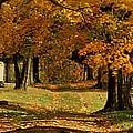 Cemetary Road In Autumn by Roger Soule