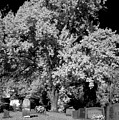 Cemetery Infrared by Kevin Work