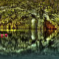 Cenote by Luis Miguel Beristain