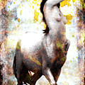 Centaur by John Constantine