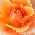 Center Of Orange Rose by John Lautermilch