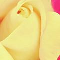Center Of The Rose by Pamela Walton