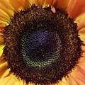 Center Of The Sun by Tammy Finnegan