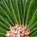 Centered Palm by Lucyna A M Green