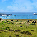 Central Coast Panorama - Hwy 1 by Lynn Bauer