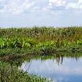 Central Florida Backwater by Allan  Hughes