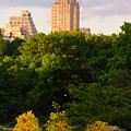 Central Park 7503 by PhotohogDesigns