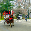 Central Park Horse And Buggy Rides New York City by William Rogers