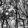 Central Park In Black And White by Bob Cuthbert