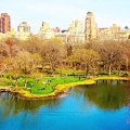Central Park by Maddison May