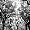 Central Park Nyc In Black And White by Bob Cuthbert