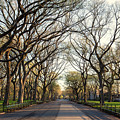 Central Park Nyc by Stefan Mazzola