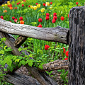 Central Park Shakespeare Garden New York City Ny Wooden Fence by Toby McGuire