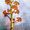 Century Plant by Casey Heisler