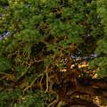 Century Tree Center by David Morefield
