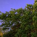 Century Tree Left by David Morefield