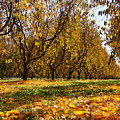Ceres Orchard - Fall by Stephen Bonrepos