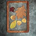 Chalkboard Leaves by Edward Fielding
